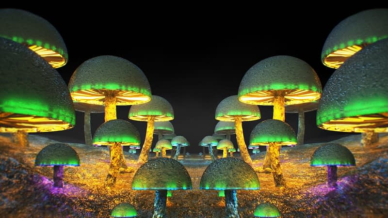 Wonderland VJ Pack - Mushrooms